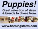 Puppies for sale - Several breeds from small to large! See our website!
