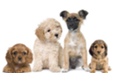 Puppies for sale - Several breeds available - Great selection!