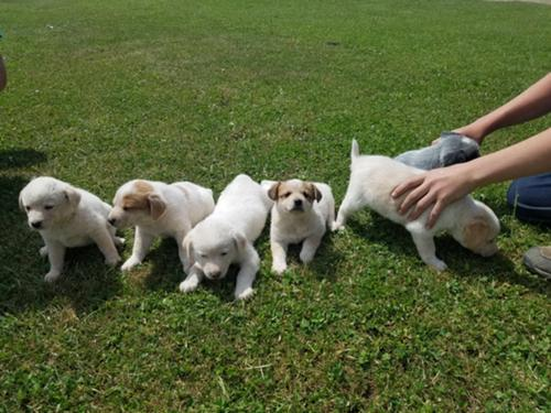 Border Collie Blue Heeler Cross Puppies This search allows you to look for ads that google has cached within the last few months. border collie blue heeler cross puppies