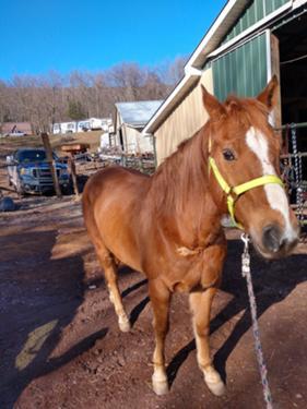Buddy 15yo Quarter Horse Broke Download 17,164 running horses images and stock photos. buddy 15yo quarter horse broke
